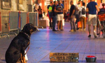 Le Resto des Zanimos : « Je ne laisse jamais un animal dans la panade »