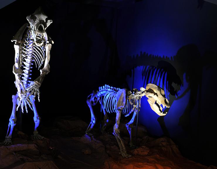 Voyage dans le temps au Muséum d'histoire naturelle de Toulouse